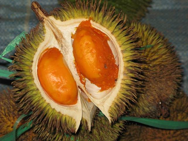 Durian Kuning  Brunei  Durian Kuning has always be mistake  Flickr