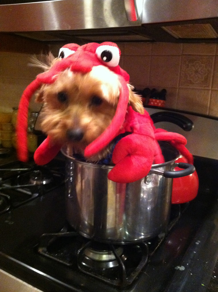 Lobster Dog in a Pot  Terms of Use Please consider