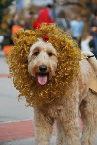 Cowardly Lion | Flickr - Photo Sharing!