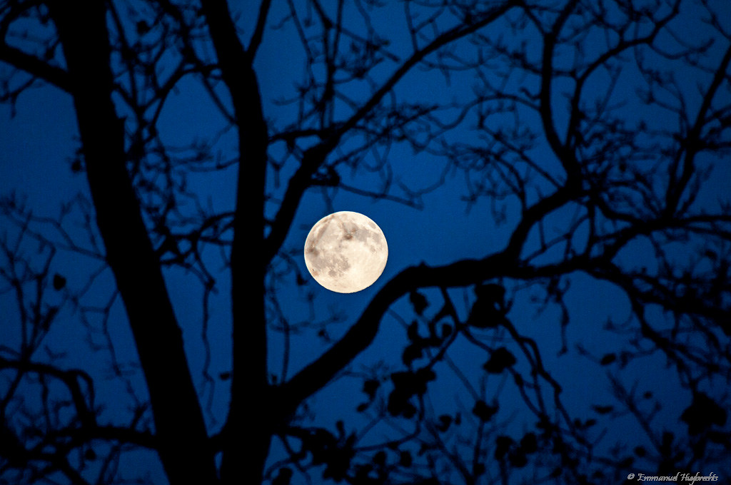 Moon In Tree Featuring The Real Moon No Fake Size