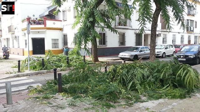 Ramas abandonadas en la acera por operarios de una contrata tras una poda de árboles en Los Remedios