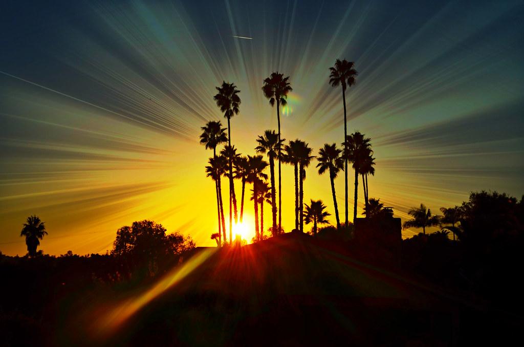 Palm Tree Sunset Glow  File name  DSC_1890 Palm tree