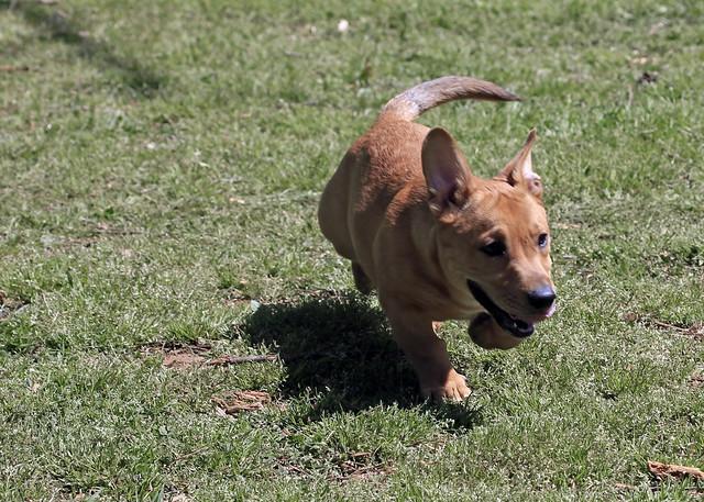8672331165 a8dcccf466 z Photos Of Pitbull Dogs