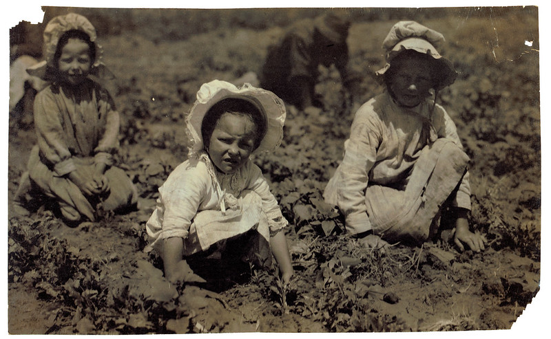 Sugar beet workers, Sugar City, Colorado. Mary, six years, Lucy, eight, Ethel, ten. Family has been here ten years. Children go to school in the winter. July 1915. Hine, Lewis Wickes, photographer.