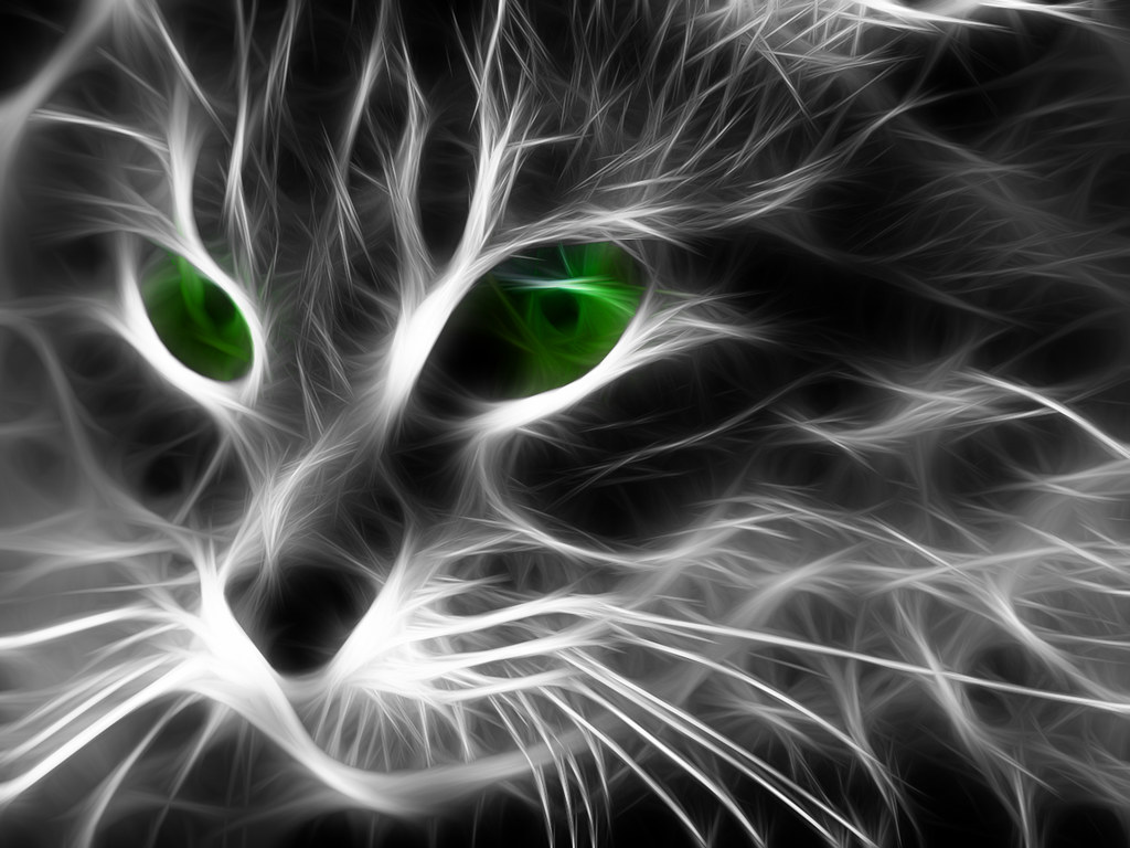Neon Anime Wallpaper Cat Face These Are Some Of The Images That I Have