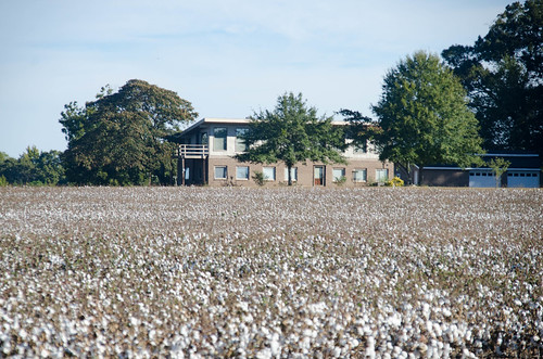 Antreville Cotton Field