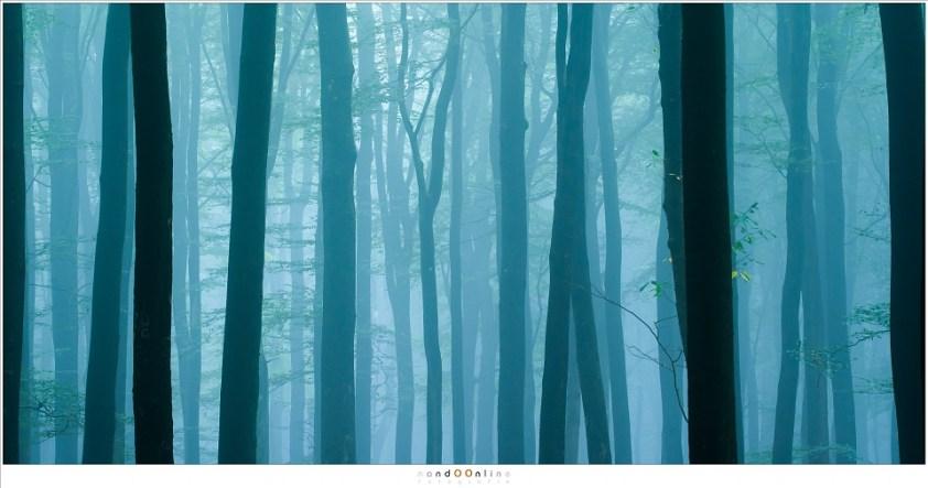 Herfst in het Speulderbos, in het blauwe licht van de ochtendschemering wachten de bomen op het eerste licht van de opkomende zon (105mm; ISO400; f/8; t=4sec)