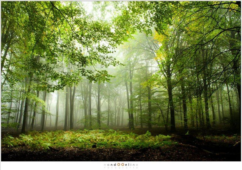 Herfst in het Speulderbos. Een open plek waar varens floreren. De herfst is nu nog ver te zoeken maar ligt al wel op de loer. (16mm; ISO100; f/11; t=2sec)