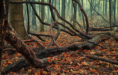 Free Fall Foliage Wallpaper Sinister Forest 2 Most Times The Forest Around Our Home
