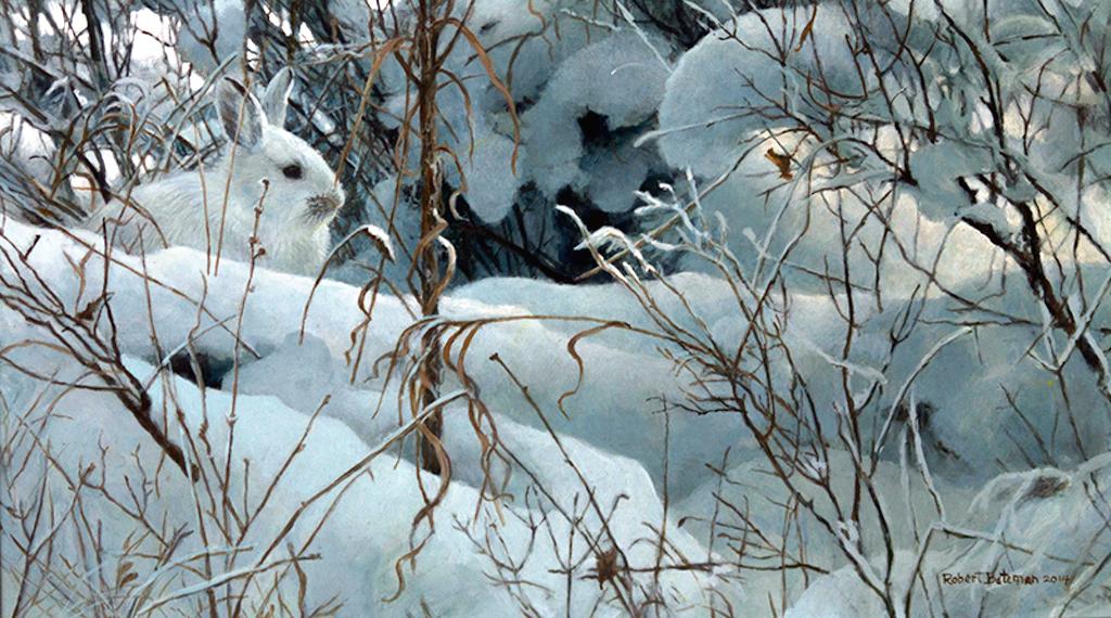 Robert Bateman New Snow Hare 2014 Robert Bateman