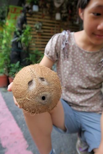令人雀喜的種子禮物:蘇木、耳豆、衰衰模樣的可可椰子(11.11ys)