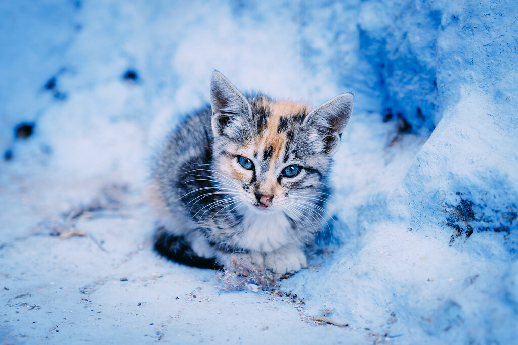 Cute Cat Images For Wallpaper Chefchaouen Cat 4 All Together Now Awwwww A