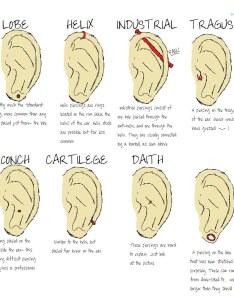 Facial piercings chart by claricehenrichon also face piercing ear di  flickr rh