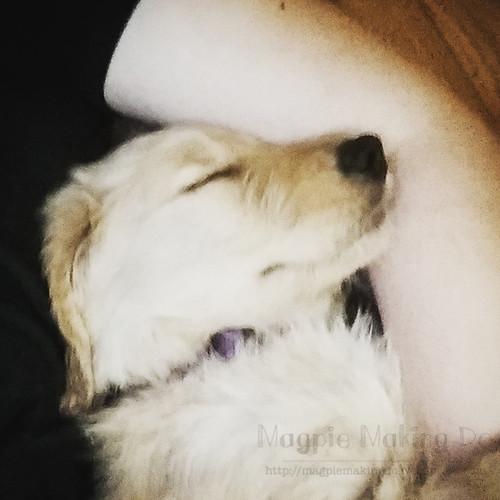 armpit cuddles