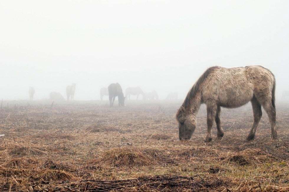 Horses in the fog 29.03.2015