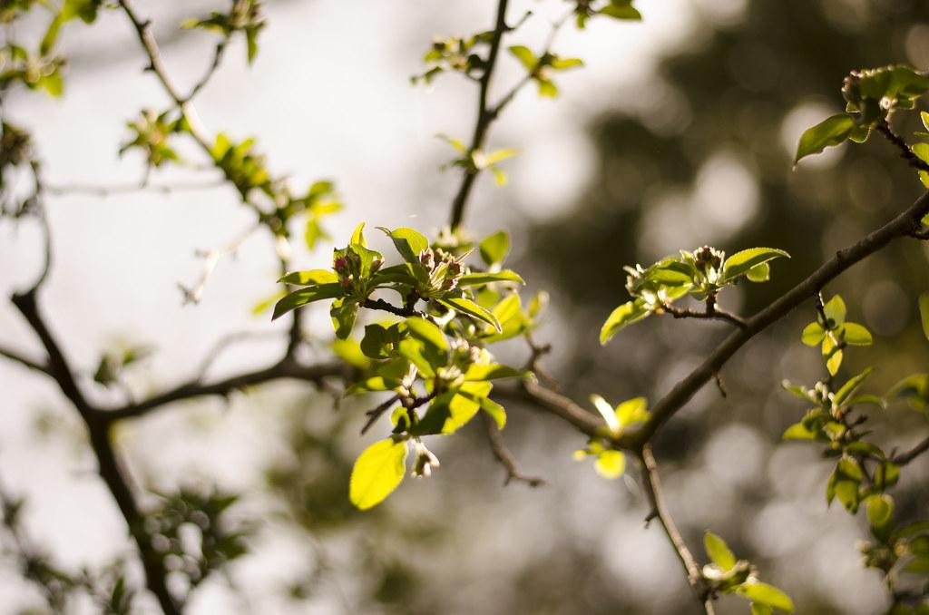bud to blossom 2