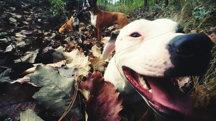happy trail dog