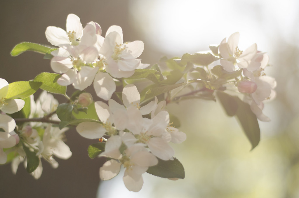 bud to blossom 6