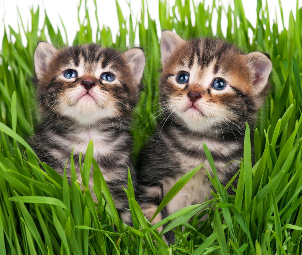 Cute Little Cat For Wallpaper Cute Kittens Cute Little Kittens In The Bright Green