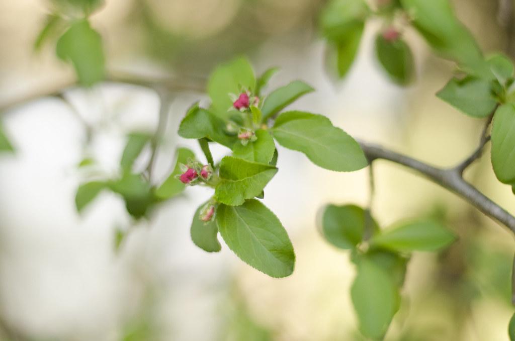 bud to blossom 3
