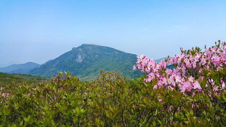 BISEULSAN 비슬산 // HIKING THE WILD AZALEA TRAIL AT MT. BISEUL