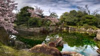 Japanese landscape garden, Ninomaru Palace. Kyoto   Cherry ...