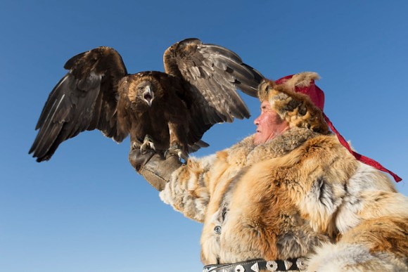 Perfect hunters: Eagles