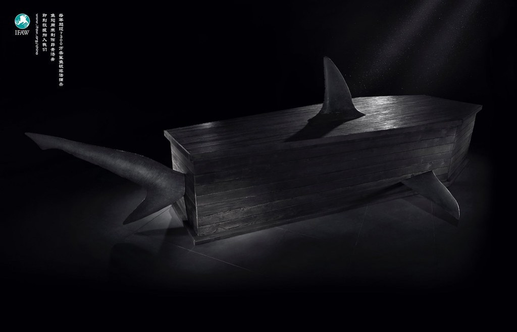 IFAW - Shark