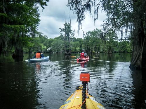 Sparkleberry Swamp-139