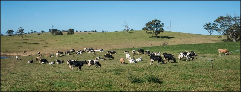 Image result for australian dairy