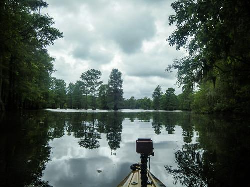 Sparkleberry Swamp-131