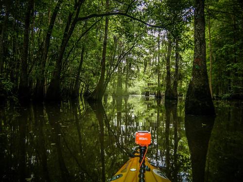 Sparkleberry Swamp-160