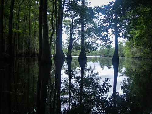 Sparkleberry Swamp-128