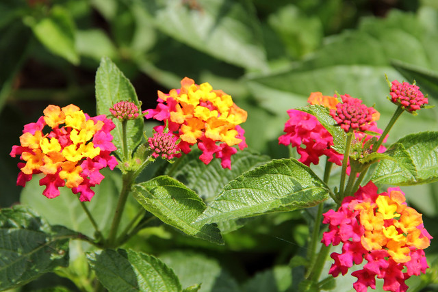 20150607_WV_Botanic_Gardens_013