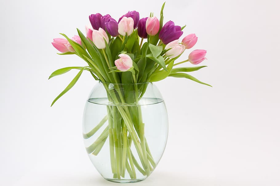 HD wallpaper: purple and pink flowers inside glass vase with water ...