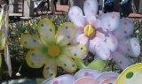 Boulder SpringFest
