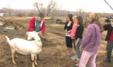 Cool After School - Haystack Mountain Goat Farm
