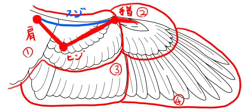 関節の位置と羽根の分類をあわせて見てみよう