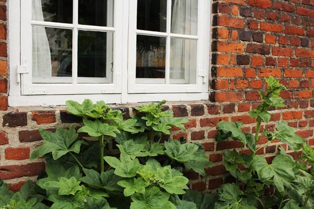plant window sm