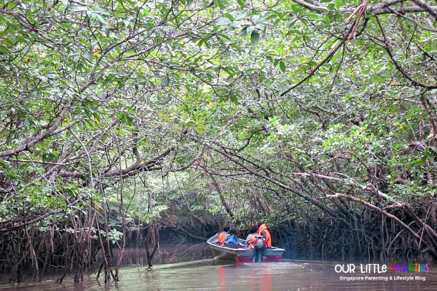 Into the mangrove 2