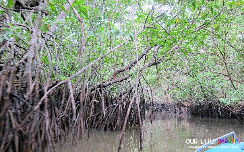 Into the mangrove
