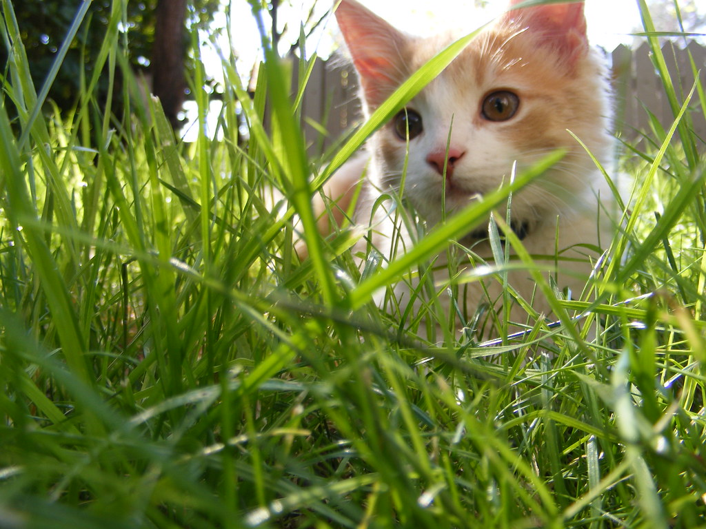 Wallpaper Of Cute Animals For Mobile Kitten In The Grass Kitten In The Grass How Cute