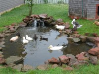 Small Pond with little Ducks. | Prince Edward Island ...