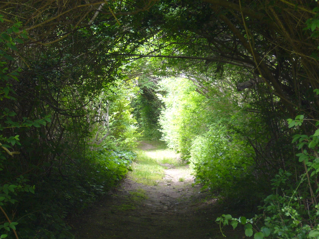 Letter S 3d Wallpaper Path Woods Hole Ma Joe Futrelle Flickr