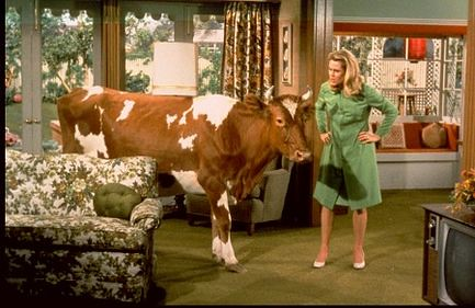 Theres a cow in the living room  twitchery  Flickr