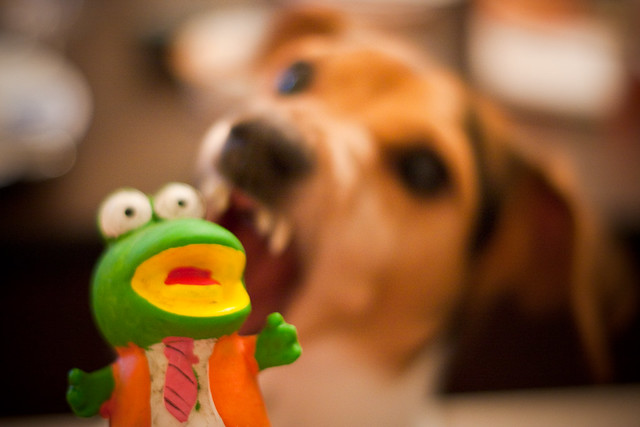 Wag the frog