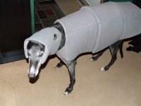 Imperial Walker (AT-AT) Dog Costume | Gaidig | Flickr
