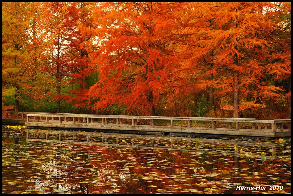 Fall Color in Cypress Pond  Van Dusen Garden Vancouver N5  Flickr