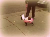 Halloween -Banana Split Dog Costume | Flickr - Photo Sharing!