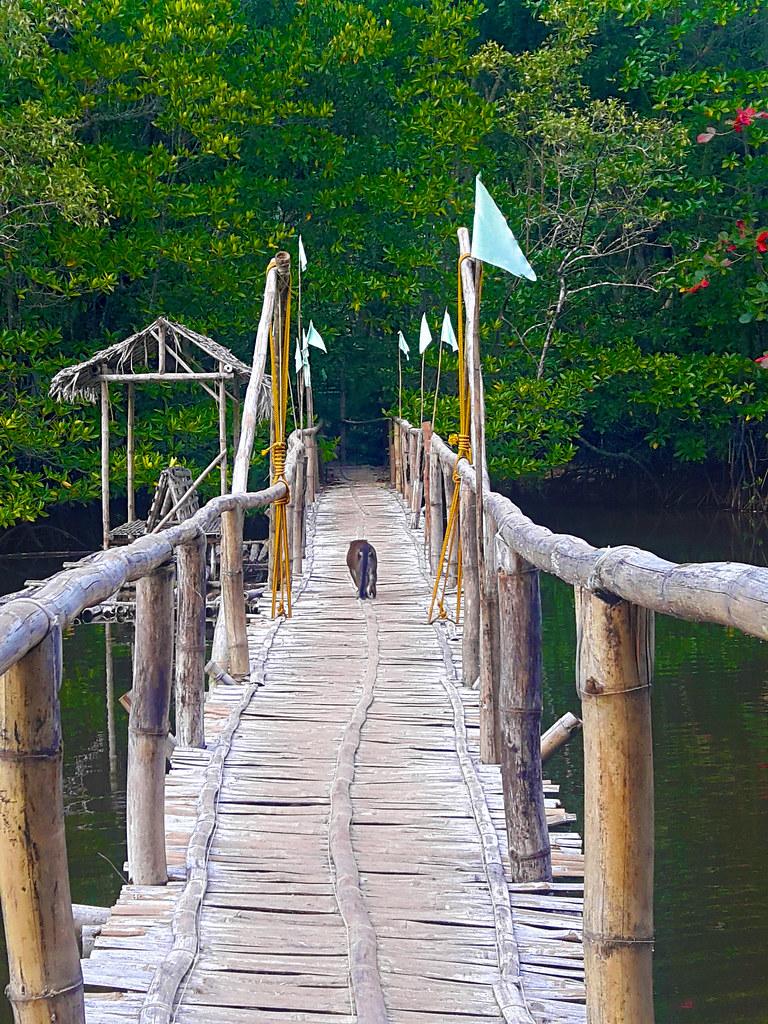 Mangrove Tour in Sabang, Palawan